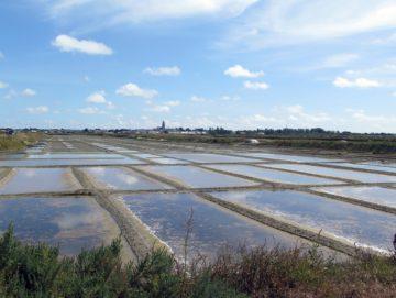 Les marais salants de Guérande (juillet 2020)