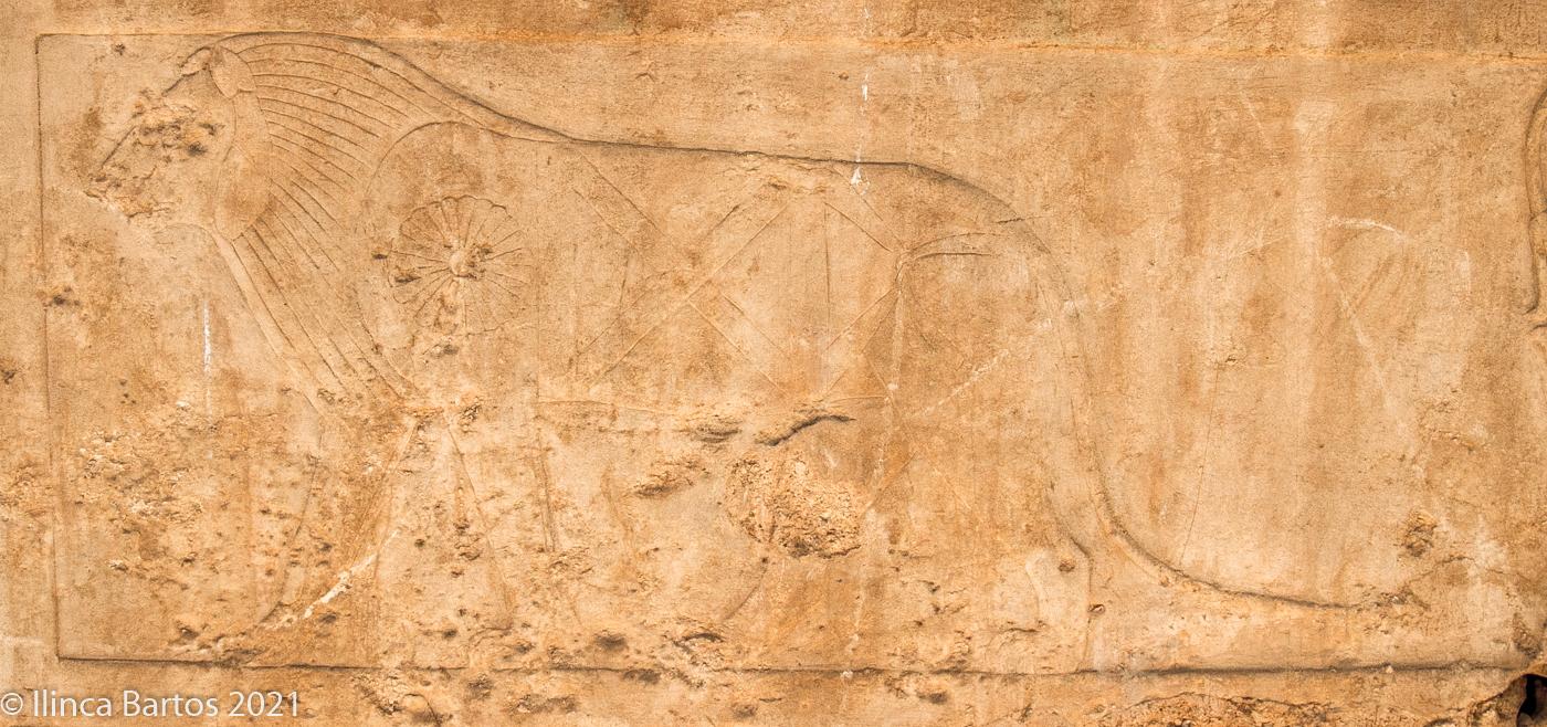 Lionne (Bastet ?) dotée d'une perruque divine striée (complexe funéraire d'Ânkhnespépy II, VIe dynastie ; © Ilinca Bartos).